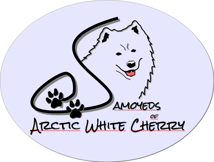 Samoyeds of Arctic White Cherry